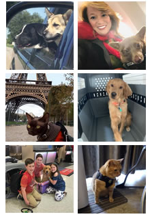 pet travel customer experiences