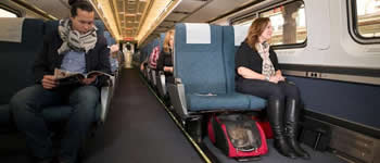 pet travel by train or public transportation