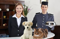 Find Pet Friendly Hotels Services