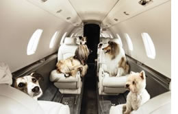 What Airlines Allow Large Dogs
