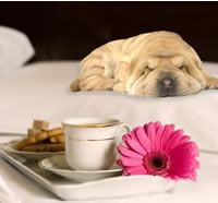 becoming a pet friendly hotel