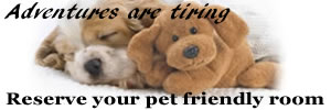 Find a pet friendly hotel at PetTravel.com